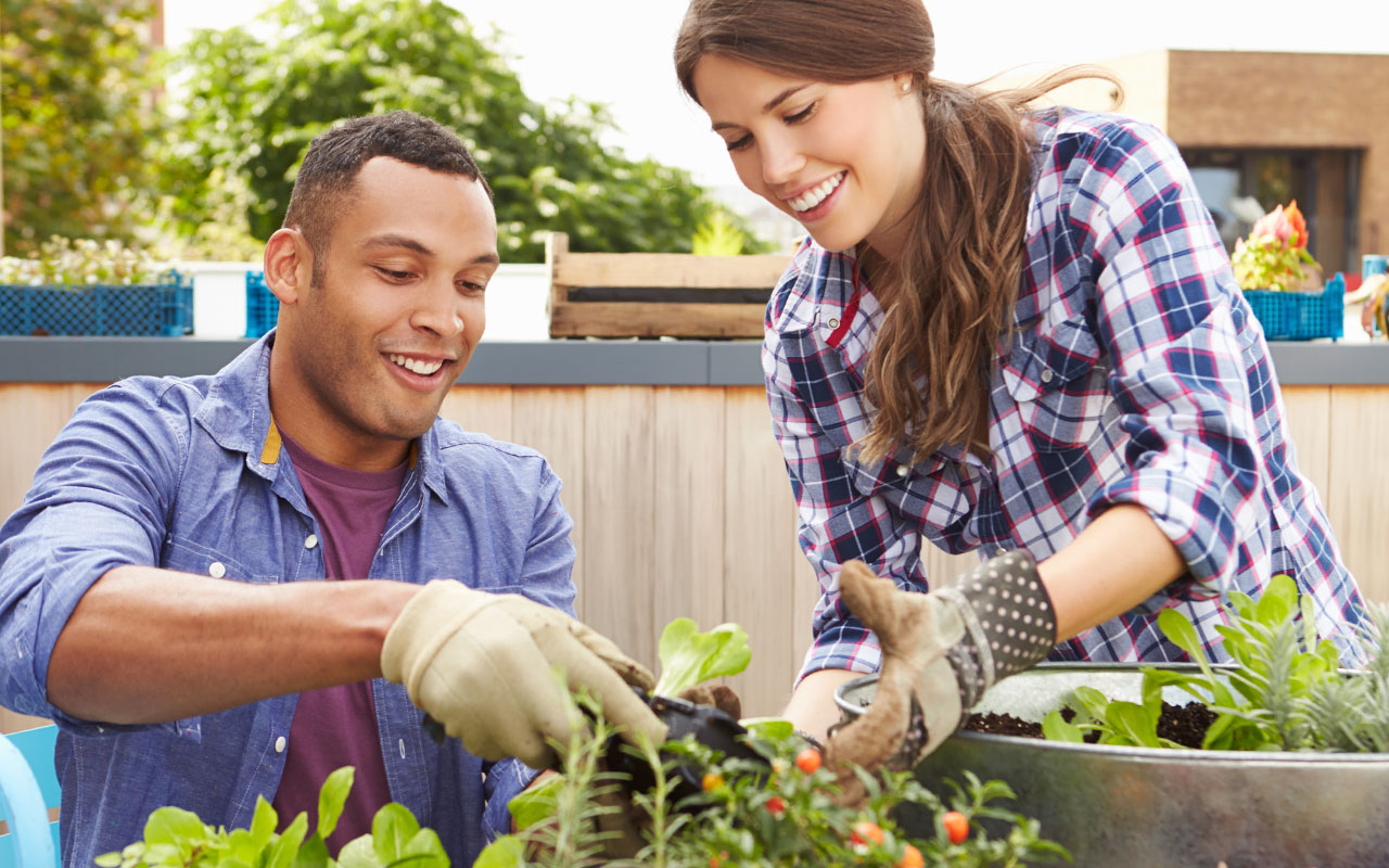 huerto urbano: como tener la huerta en casa. Plantas y calendario